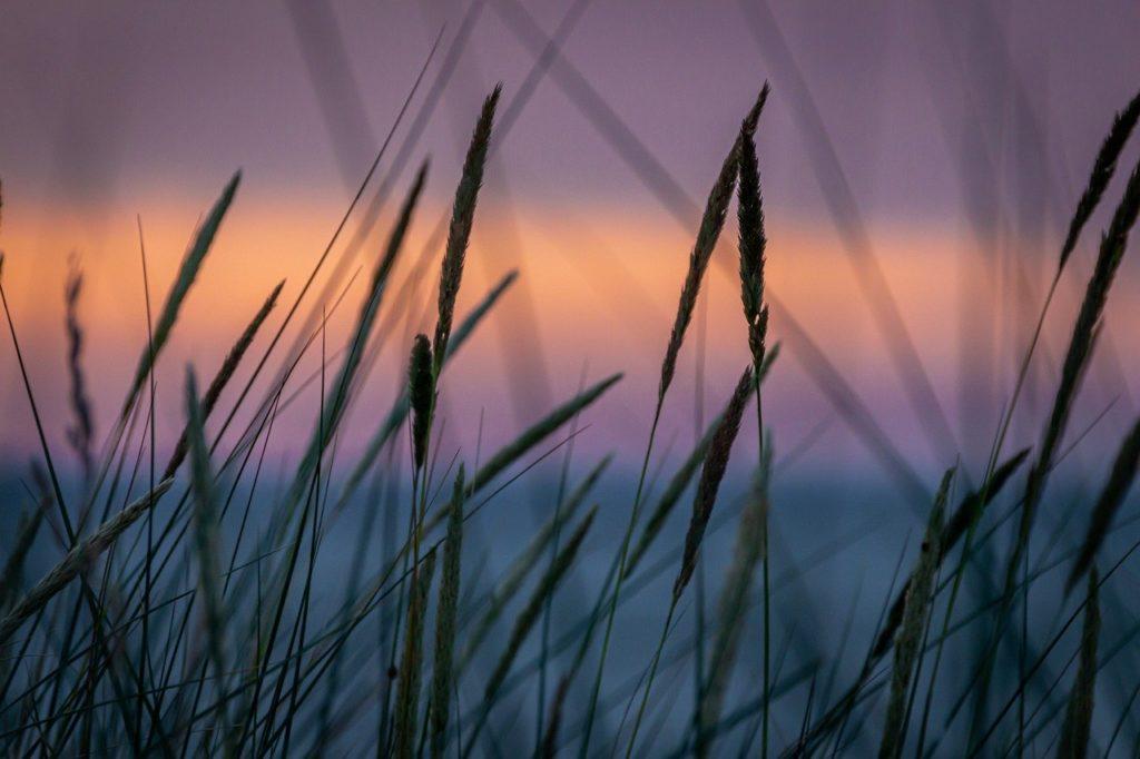 La nature au crépuscule